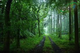 قدم زدن در جنگل