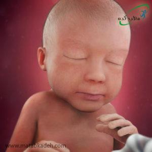 جنین در هفته بیست و هشتم بارداری